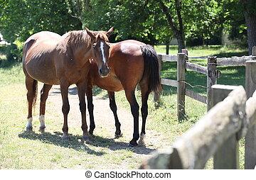 horses., deux