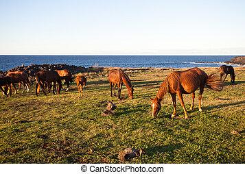 Horses eating grass on Easter Island