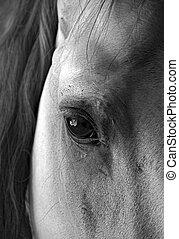 Horse\'s eye