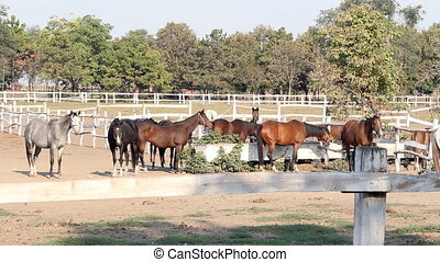 horses farm scene