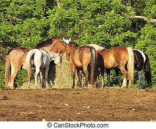 horses feeding on a farm