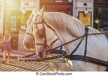 Horses for drawn carriage or Fiaker, popular tourist...