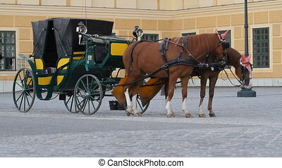 Horses for hire in Vienna - Carriage with horses for hire in...