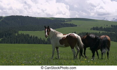 Horses Galloping in the Wild - Herd of horses grazing amidst...