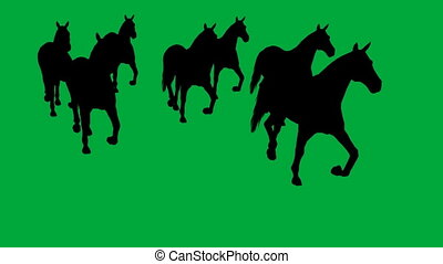 horses galloping - separated on green screen