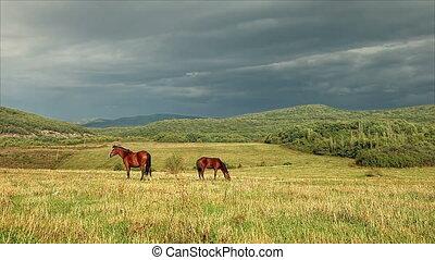 Horses graze in a pasture