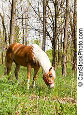 Horses graze in the forest edge.