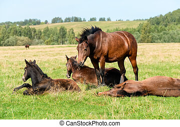 Horses graze in the meadow on a summer day