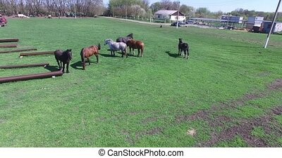 horses graze on a small farm - horses with long mane...