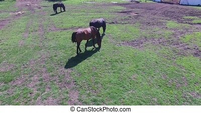 horses graze on a small farm