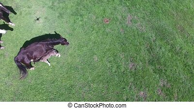 horses graze on a small farm