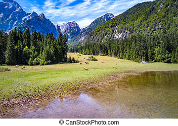 Horses graze on green field.Lake Lago di Fusine Superiore...