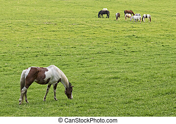 Horses Grazing At Sunset In Cades Cove