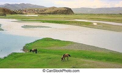 Horses grazing near river at Ulaanbaatar Suburbs, mongolia