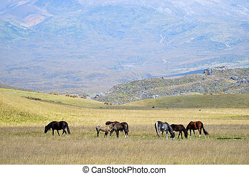 Horses grazing in a meadow on the background of high mountains.