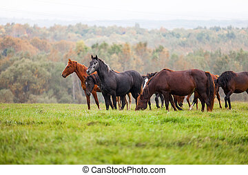 Horses grazing in a meadow in autumn