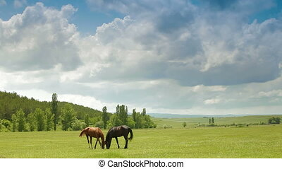 Two Young Horses Grazing In Spring Pasture