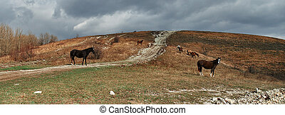 Horses grazing in the mountains