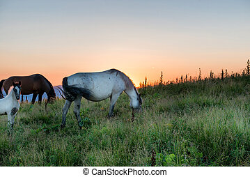 Horses grazing on a field
