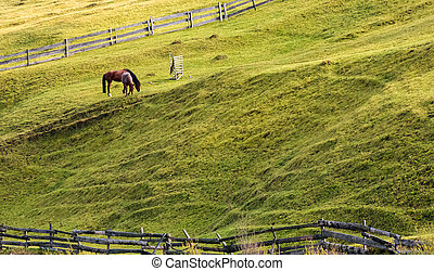 horses grazing on a grassy hillside with wooden fences....