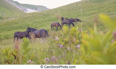 Horses grazing on green field and eating grass on mountain landscape background