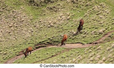 Horses Grazing On Green Mountain Slope In Spring In...