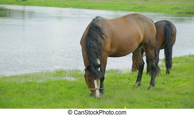 Horses grazing on meadow near river