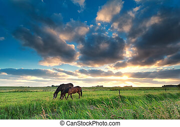 horses grazing on pasture at sunset