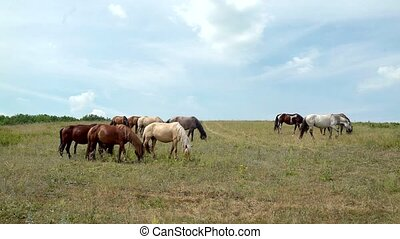 horses grazing on the background of cloudy sky
