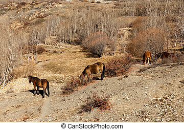 horses grazing on the slope of a mountain