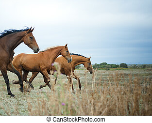 Horses herd - Wild beautiful horses running on freedom