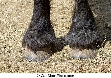Closeup shot of a black horse's hooves
