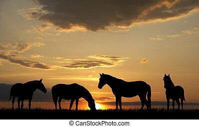 Illustration of horses on sunset background
