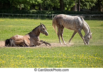 Horses in a clearing