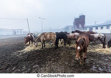 Horses in a farm in Slovakia