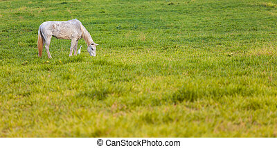 Horses in a field,