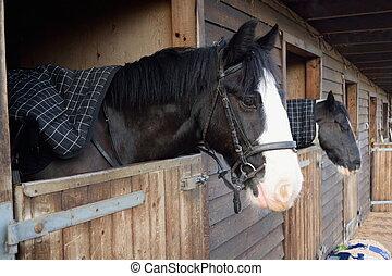 Horses in barn door