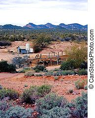 Horses in corral in the Sonora desert Arizona