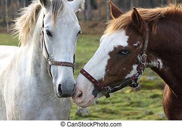 Horses in love - Beautiful horses in love
