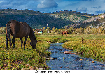Horses in mountain ranch