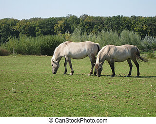 Horses in nature park