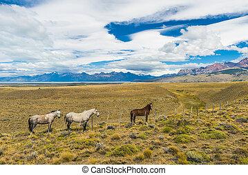 Horses in Patagonian plains