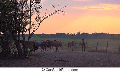 Horses in ranch paddock - Herd of horses on animal farm...