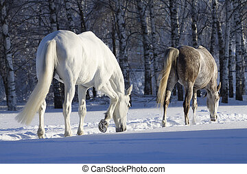 horses in snowy forest