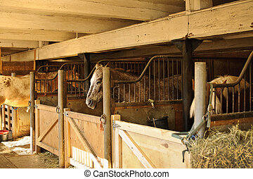 Horses in stables - Horse stables with wooden doors and...