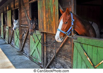 Horses in stables