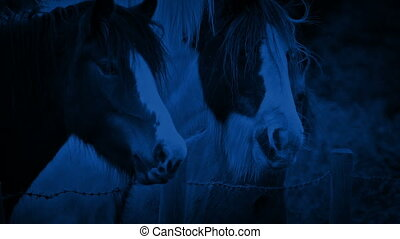 Horses In The Field At Night