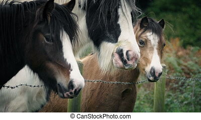Horses In The Field Portrait - Hand feeding grass to some...