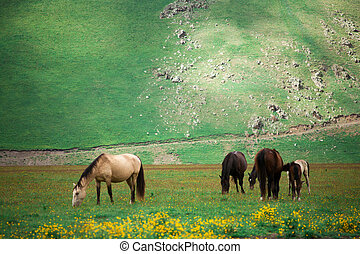 Horses in the green foothills of the mountains