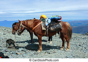 Horses in the mountains.